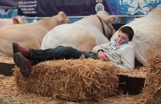 The end of a perfect day. Richard Fleming relaxing after a hard day at the Balmoral show. The cattle belong to Albert Connolly's from Ballynahinch Brigadoon Charolais. Picture by Bernie Brown.