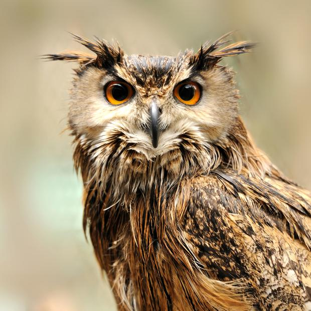 File image of an owl: Around 20 birds including owls are missing after they were broken out of their cages