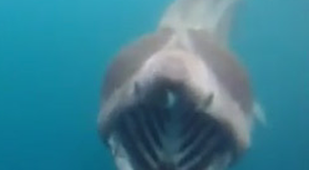 The video shows the giant basking shark tailing the kayaker off the Donegal coast
