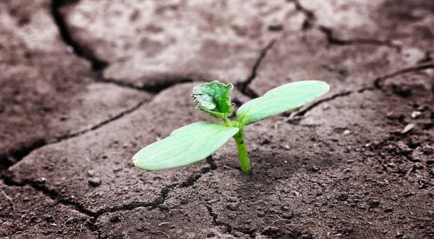 The green shoot of recovery?...