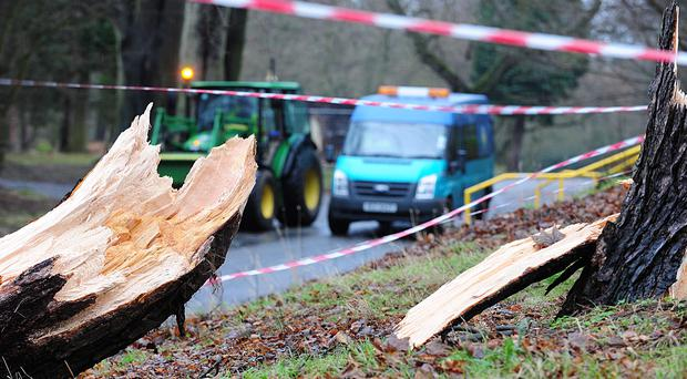 Two trees have been ripped down by the wind in Ormeau Park Belfast. Severe weather overnight has caused damage to the electricity network in Northern Ireland with around 5,000 homes still without power.