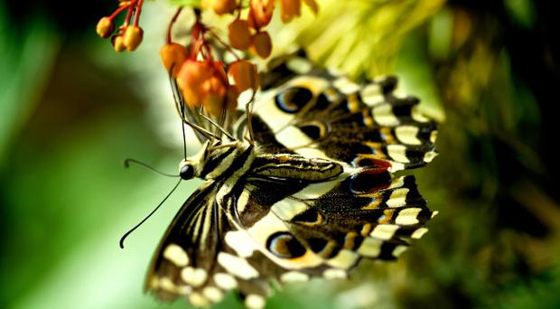 Everyday flora and fauna make up a large part of part of Michael Kerr's macro photography