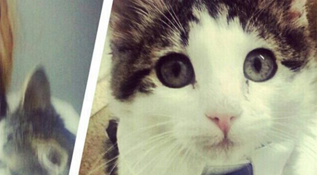 'Khat' the cat suddenly turned on its owner and her siblings