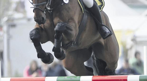 Douglas Hill ridden by Eddie Maloney tackles one of the fences |during the showjumping competition yesterday