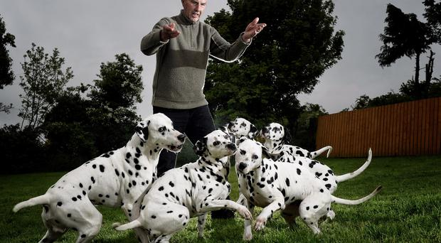 Spot the fan: Danny Gamble with his beloved dalmatians