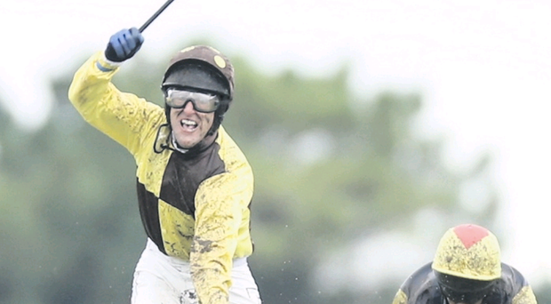 Power packed: Robbie Power can triumph on Authinger in tonight's Down Royal feature, the Tote Ireland Galway Plate Trial