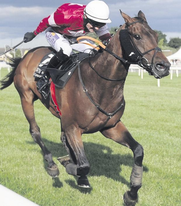 Cape crusader: Brian O'Connell rides Cape Glory to victory in Punter Pack Hurdle at Down Royal last night