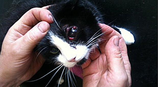 Judy faces losing an eye after being shot with a pellet gun