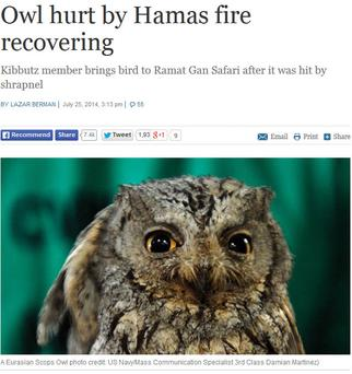 The story which ran on the Times of Israel website about an owl which was injured