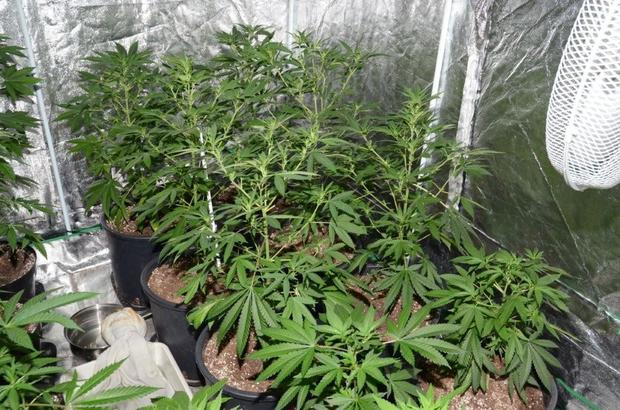 The cannabis factory was discovered in Muckamore, Antrim