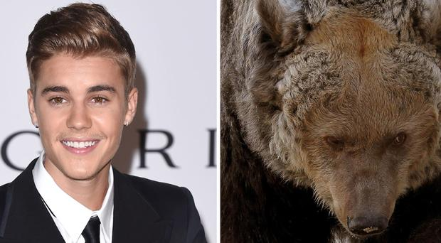 Russian fisherman saved from vicious bear attack by Justin Bieber ringtone