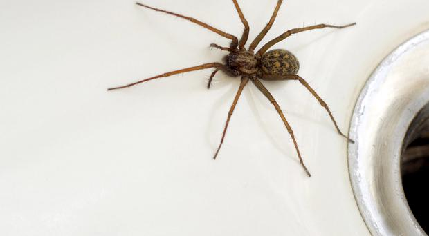 Around 4% of the UK population are scared of spiders.