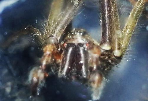 A camera phone snap of a large spider in Belfast captured in a glass. Photo by Gary Fennelly