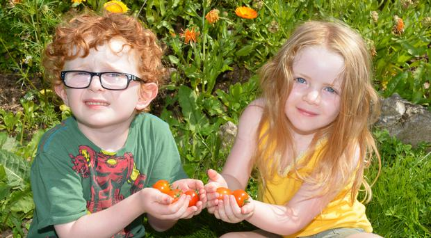 Toby and Tilly Boyd help gather in the Root Soup harvest for Culture Night Allotments