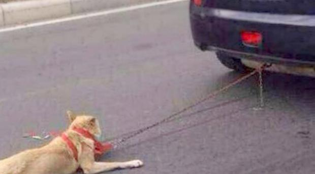 Mr Zheng Weiyang told local press that he chained the dog to the car because his wife had told him to 'get rid' of the dog