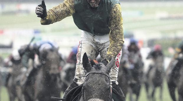 Muddied but victorious: Ted Veale, after winning the County Hurdle at the Cheltenham Festival, can triumph today at Roscommon