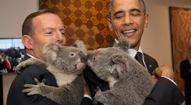 Australia's Prime Minister Tony Abbott and United States' President Barack Obama meet Jimbelung the koala before the start of the first G20 meeting on November 15, 2014 in Brisbane, Australia. (Photo by Andrew Taylor/G20 Australia via Getty Images)