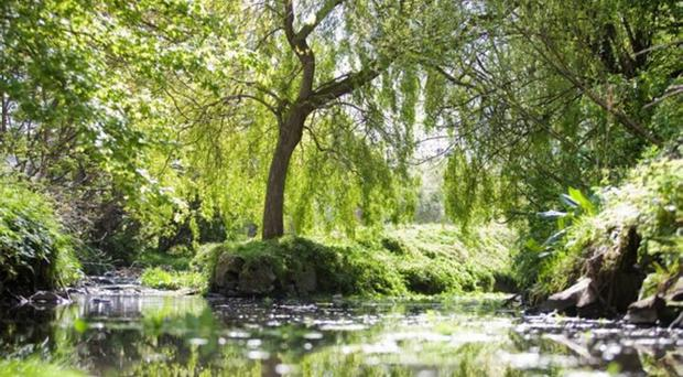 A beautiful sea of green at Connswater in east Belfast