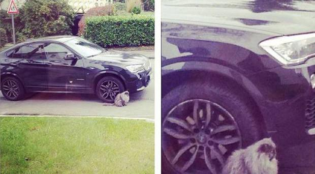 Mikael Forssell missed training because of 'a cat standing next to his car'