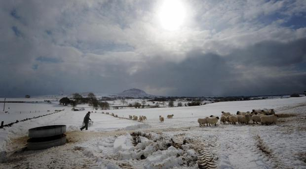 Sheep trying to feed near Slemish mountain in Co Antrim in 2013. Pic Colm Lenaghan/Pacemaker Press