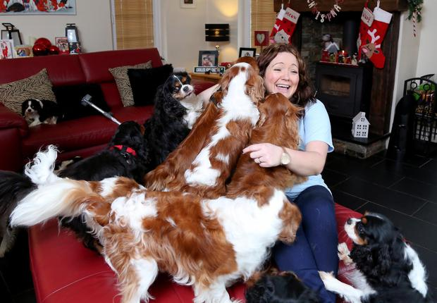 Dog's life: Catherine Southwell has made it her mission to give neglected Cavalier King Charles spaniels the love they deserve
