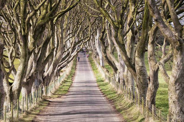 This beautiful avenue of beech trees in Stranocum, Co Antrim was planted by the Stuart family in the eighteenth century. For fans of the HBO's epic series Game of Thrones, it has become a cultural Mecca as it representing the King's Road in the popular series.