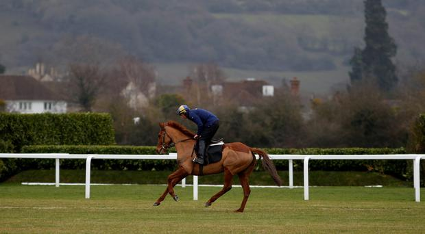 Annie Power strides out on the gallops at Cheltenham racecourse