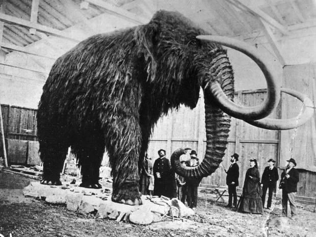 It is without irony that some scientists are seriously raising the possibility of bringing back the mammoth from extinction to help prevent our own demise