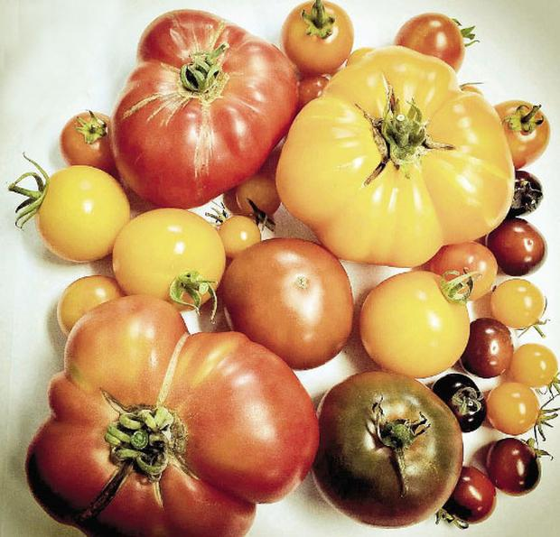Tasty Crop: A Selection of Heirloom Tomatoes