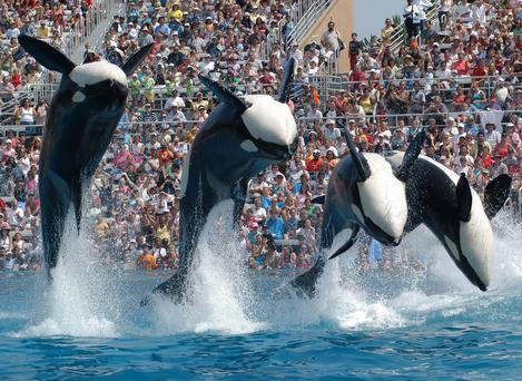 SeaWorld marine park is accused of deceptive business practice