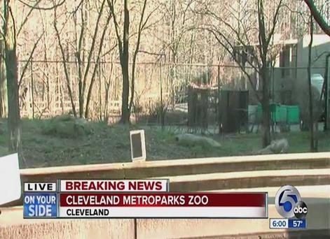 Cleveland Metroparks Zoo plans to file child endangerment charges against the boy's parents