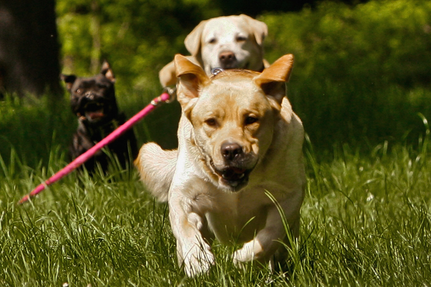 Is it time to let dogs off the leash?