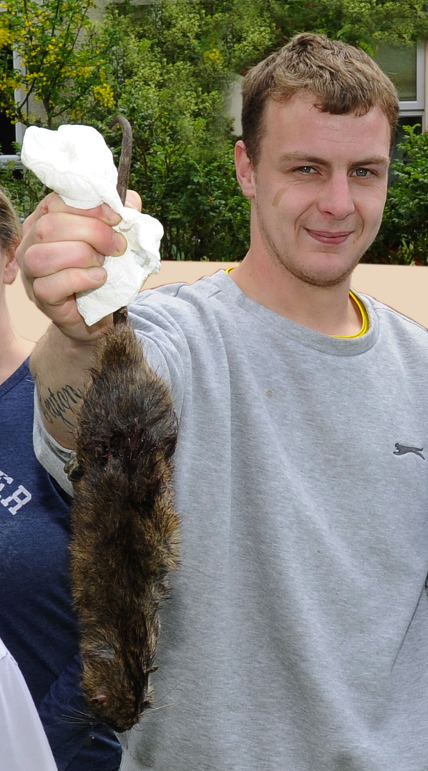 Ryan Stavely holds up a dead rat caught in Killyleagh
