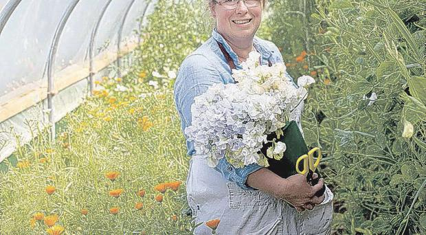 Flower Power: Georgie Newbery, founder of Common Farm Flowers in Somerset, atg work in her greenhouse