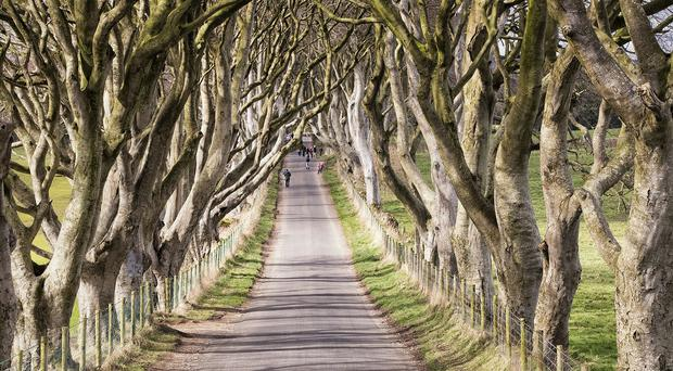 Game of Thrones film location - Stranocum Dark Hedges - Ballymoney