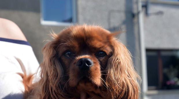 Bella the hero family pet helped prevent a tragedy. Pic Colm Lenaghan/Pacemaker Press