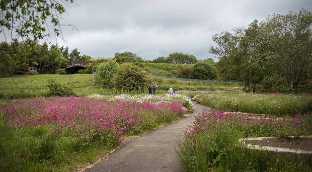 The Scottish flagship project at Barrhead, where a disused sewage works has been transformed into a public space filled with wild flowers
