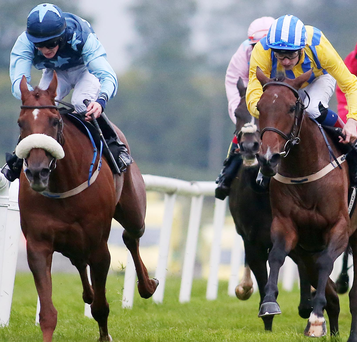 Dead heat: He'll Be Remembered (left) with Tom Madden on board and Whiteout (right) under Declan McDonagh's guidance couldn't be separated in the Ulster Cesarewitch at Down Roy