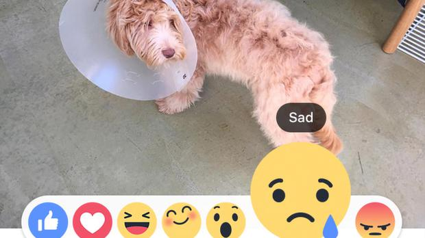 Facebook reactions: The status will count how many likes, loves, angers a post has
