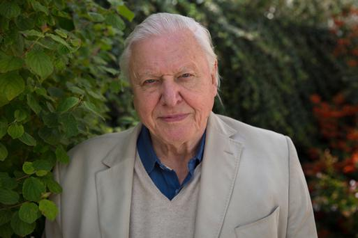 Undated BBC Handout Photo from The Hunt. Pictured: Sir David Attenborough. See PA Feature TV Attenborough. Picture Credit should read: PA Photo/BBC/Silverback Film/Huw Cordey. WARNING: This picture must only be used to accompany PA Feature TV Attenborough. WARNING: Use of this copyright image is subject to the terms of use of BBC Pictures' BBC Digital Picture Service. In particular, this image may only be published in print for editorial use during the publicity period (the weeks immediately leading up to and including the transmission week of the relevant programme or event and three review weeks following) for the purpose of publicising the programme, person or service pictured and provided the BBC and the copyright holder in the caption are credited. Any use of this image on the internet and other online communication services will require a separate prior agreement with BBC Pictures. For any other purpose whatsoever, including advertising and commercial prior written approval from the copyright holder will be required.