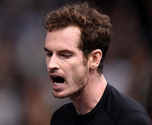 Will travel: Andy Murray going to Belgium with the Davis Cup team