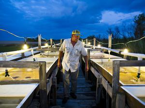 Waterman Danny Tyler checks on his soft-shell crabs, crabs that have just molted and are soft to the touch, and especially delicious to eat, outside his crab shanty at dusk on the Smith Island town of Tylerton, Maryland, USA, 11 June 2013.    Credit: Photograph by Jim Lo Scalzo, epa/Corbis