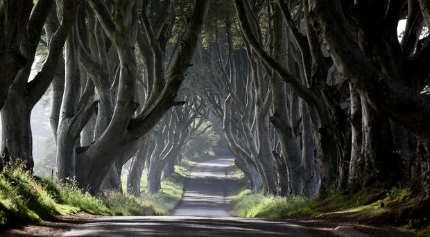 The Dark Hedges near Stranocum, Co Antrim, which have featured in Games of Thrones