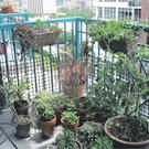 Tiny Packages: Cramped conditions needn't prevent you from opening up a beautiful balcony 'garden'