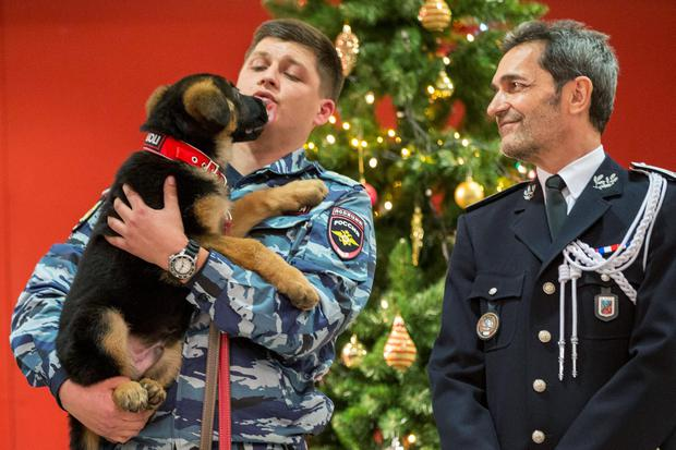 A Russian police officer holds a puppy, named Dobrynya, as a French police officer smiles before presenting the puppy to French police in the French Embassy in Moscow, Russia, Monday, Dec. 7, 2015