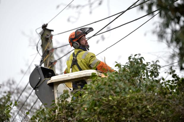 NIE workers remove a tree that has fallen on over head power cables on the Eglantine road in Lisburn. Photo: Presseye