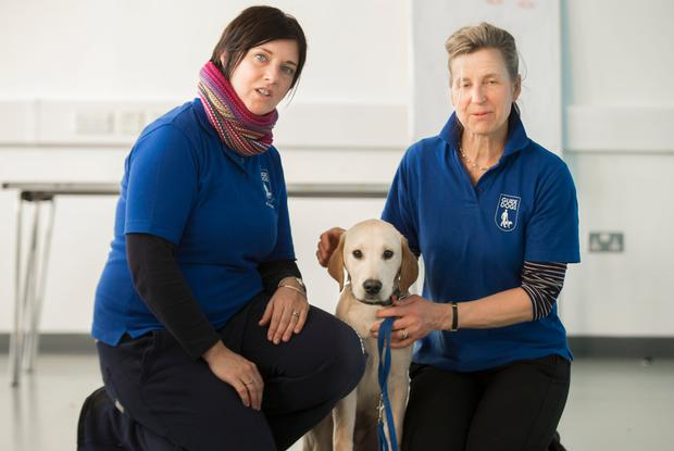 Picture - Kevin Scott / Belfast Telegraph Kath Munro and Heather Gilmore with puppy Frankie Belfast, UK - January 14 , Pictured is puppies at Queens on January 14, 2016 ( Photo by Kevin Scott / Belfast Telegraph )