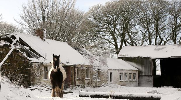 Ponies brave the coldest of weather on at Dundrod just outside Belfast as Northern Ireland woke up to a blanket of snow for the first time this year. Photo Stephen Davison/Pacemaker Press
