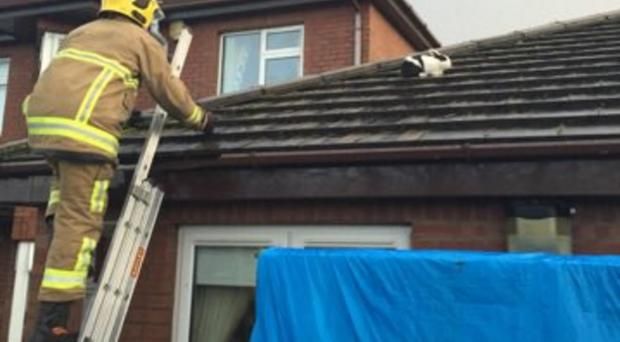 A firefighter rescues the rabbit from the roof
