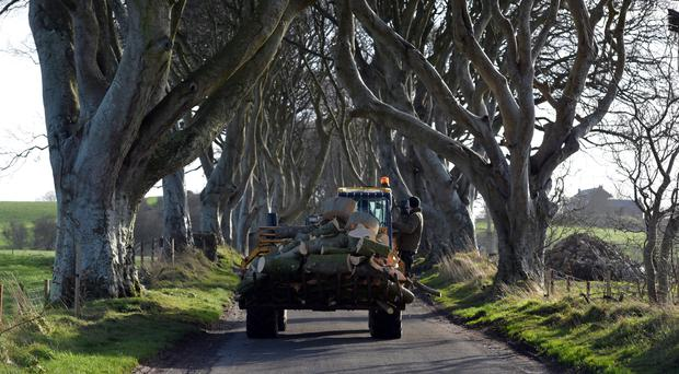 Trees fallen at the Dark Hedges after Storm Gertrude swept across Northern Ireland. The trees made famous by the HBO series Game of Thrones, have collapsed onto the Bregagh Road near Armoy. Photo Colm Lenaghan/Pacemaker Press